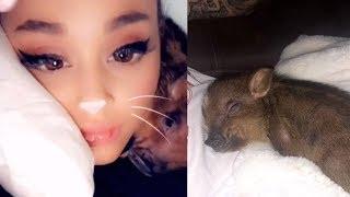 Ariana Grande & Pete Davidson Become Parents To A BABY PIG