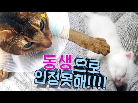 먼치킨 새끼고양이 집에온 첫날! 첫째고양이의 텃새에 과연 무사할수 있을까? 디즈니 애니메이션 미미인형 barbie인형의 재미있는 인형극 어린이채널♡모모TV/모모토이즈