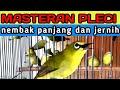 Masteran Pleci Nembak Panjang Suara Jernih Dan Materi Mewah  Mp3 - Mp4 Download