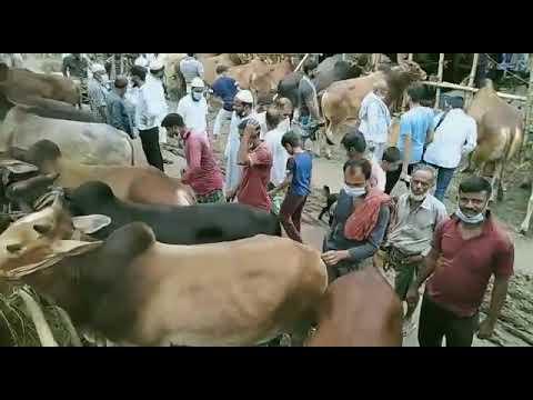 রাজধানীর হাটগেুলোতে বাড়ছে পশু, ক্রেতা কম, নেই কোন স্বাস্থ্য সচেতনতা