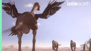 Oviraptorid fights to protect nest | Planet Dinosaur | BBC thumbnail