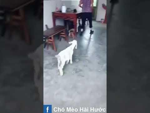 [Love TikTok] Pet Funny Best funny Dog Video Cat Funny 16