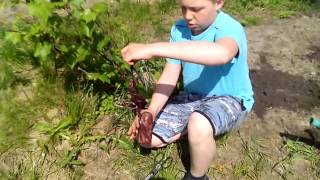Анонс к видео (как сажать семена?)-сажаем виноград(, 2015-06-01T09:45:53.000Z)