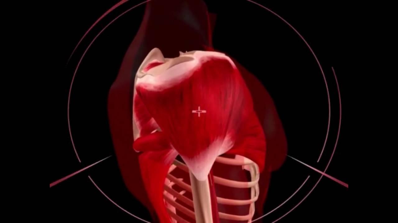 Видео артроскопия плечевого сустава жидкости коленном суставе