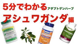 【筋トレ】5分でわかるアダプトゲンハーブ!!アシュワガンダ編!!