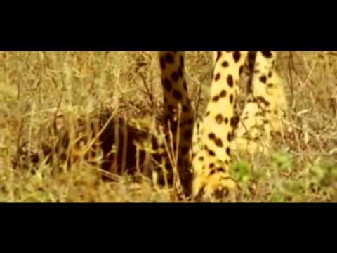 Rege - Trailer - Upcoming Marathi Movie - Mahesh Manjrekar, Santosh Juvekar