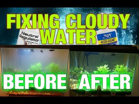 Cloudy aquarium water step by step fixing youtube for My fish tank water is cloudy