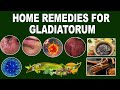 Herpes Gladiatorum | Natural Home Remedies For Treatment Of Herpes Gladiatorum