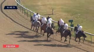 Vidéo de la course PMU PRIX PIC HARDI