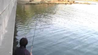 錦海湾のメバリング&シーバス2010-4-29