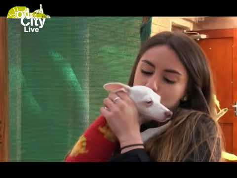 Our City visits the Animal Anti-Cruelty league