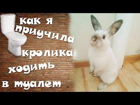 Как кролика приучить к туалету