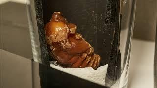 セミの幼虫8Kタイムラプスの失敗動画です。