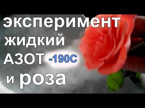 Эксперимент Роза + Жидкий азот - замораживаем и разбиваем розу
