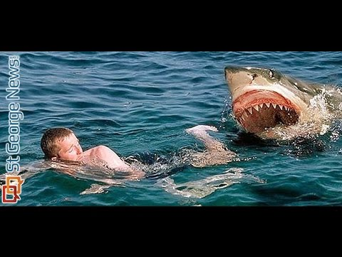 shark attack caught on tape nature documentary national