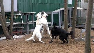 Когда собаки дерутся, что делать? Выпуск 4.