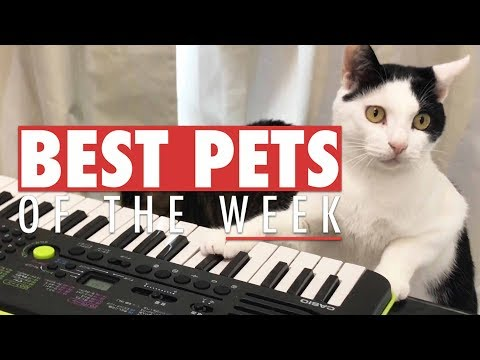 Best Pets of the Week | October 2017 Week 1