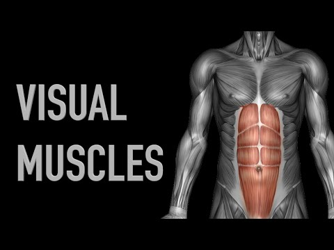 Visual Muscles: Upper Back - Upper Arm - Black Background - YouTube