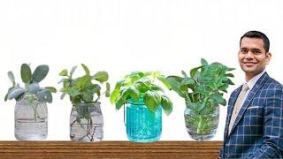 6 Трав Которые Вы Можете Выращивать Дома В Воде Снова И Снова