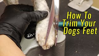 Trim Your Dogs Feet At Home DIY