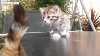Самые смешные котята мира