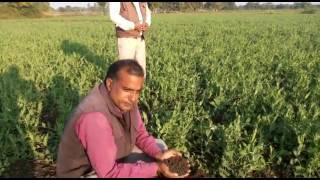 देसी तरीके से उगाई हुई फसल जीरो बजट खेती