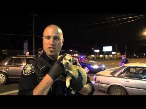 Police Arrest Puppy