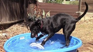 Dug Playing In His New Pool
