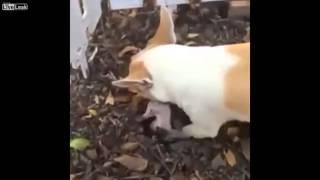 شاهد..كلبة تدفن صغيرها بعد موته