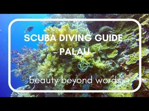 ForSomethingMore - Palau Scuba Diving Guide