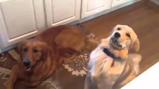 Top Fail Animals Video 2014 -2015