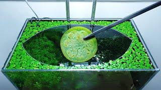 28th Month – (Boiled Eggplant Feeding Frenzy) NO filter, NO CO2, NO Ferts 5 Gallon Nano Tank