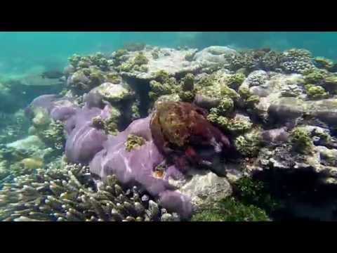 Freediving Raja Ampat - setkání s chobotnicí