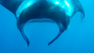 Gambar cover Sailing into freedom   Episode 52 The mantas of Lady Musgrave Island