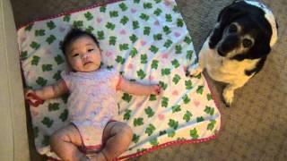 Baby and Dog 赤ちゃんと遊びたい犬の華