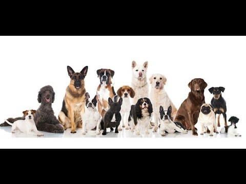 Comment Dresser Un Chien Au Sanglier - 20 techniques à connaître - Éducateur canin - Tuto