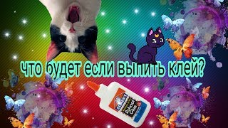 Что будет если выпить клей? (Violet cat)