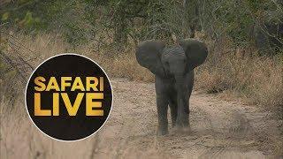 safariLIVE - Sunset Safari - July 9, 2018 thumbnail