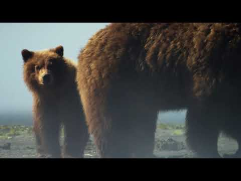A Brown Bear teaches her young to hunt for clams | Alaska: A Year In The Wild | Channel 5