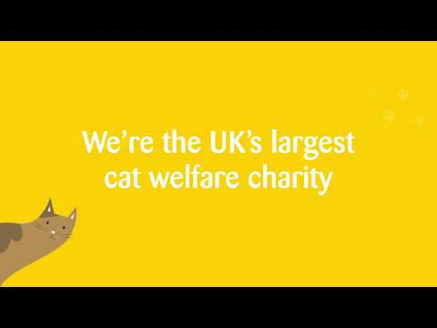 📺 Welcome To Cats Protection's YouTube Channel 🐱