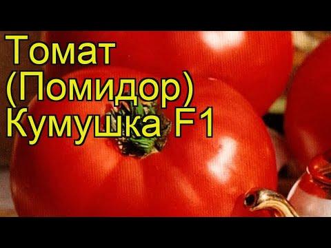 Томат обыкновенный Добродея. Краткий обзор, описание характеристик, где купить семена