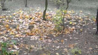 Wiersze o jesieni