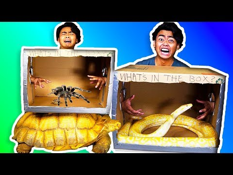WHAT'S IN THE BOX CHALLENGE! ~ Giant Snake, Tortoise, Scorpions, Lizard