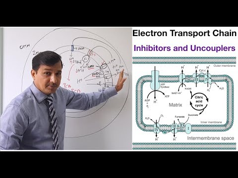 Electron Transport Chain - Inhibitors and Uncouplers