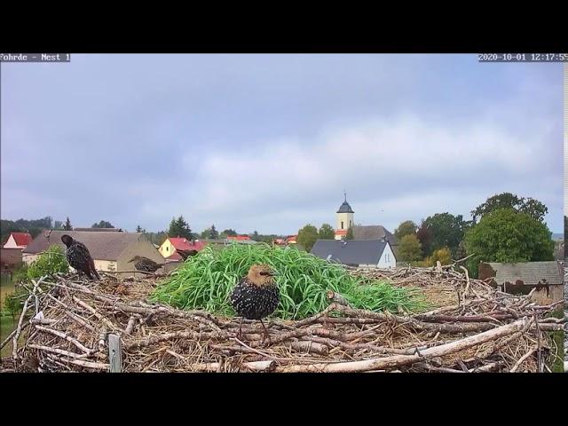 Neue Besucher auf dem Horst! 01.10.20
