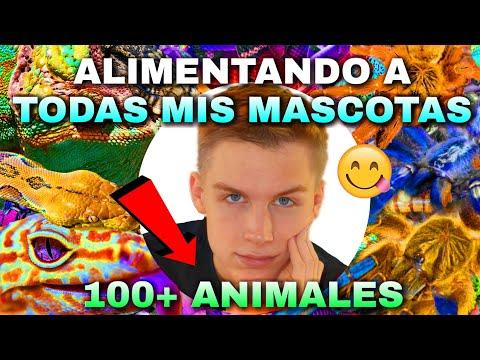 ALIMENTANDO A TODAS MIS MASCOTAS (+100 ANIMALES) *INCREÍBLE* | Tag De Las Mascotas 🐾 | Tomas Pasie