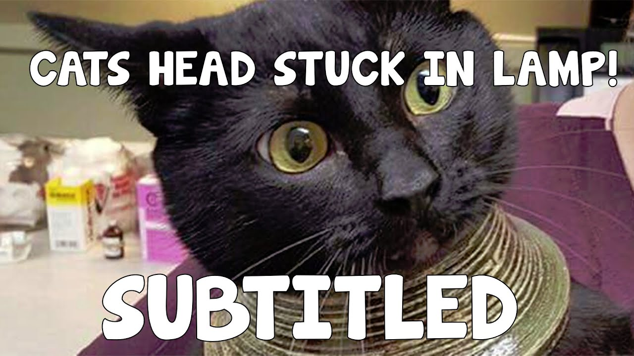 CAT GETS HEAD STUCK IN LAMP! (Subtitled) - YouTube