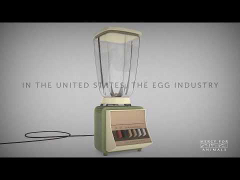 Did you know the egg industry puts baby chicks in blenders?
