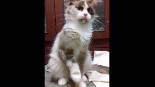 Кошка не хочет сниматься в кино