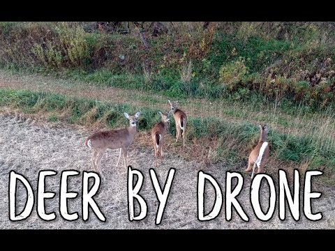 Deer By Drone DJI Spark Millville Minnesota Bing Err HD Fall Colors